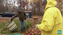 Tools You Can Use To Clear Away Fall Leaves